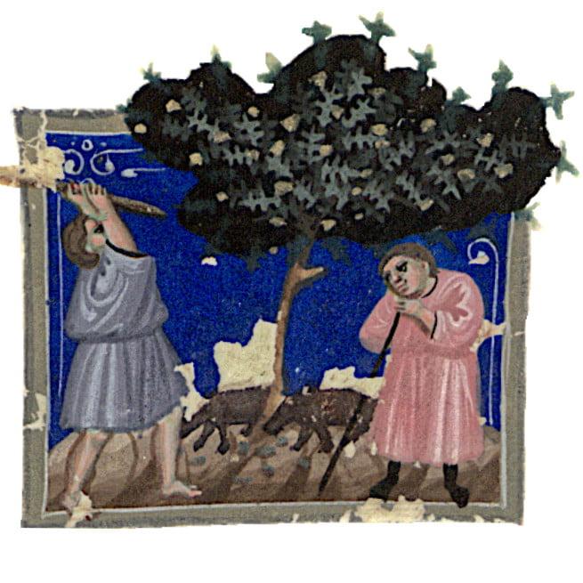 Representação do mês de Novembro no Missal Antigo do Lorvão, séc. XV